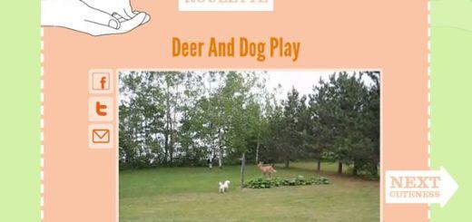 Cute Roulette, divertidos vídeos de animales al azar