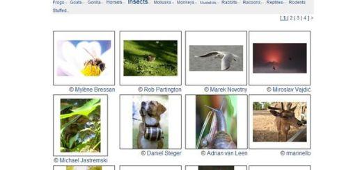 The Open Photo Project, miles de fotos libres para tus proyectos