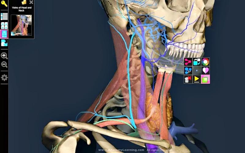 3D Anatomy Learning: app Chrome para conocer la anatomía humana