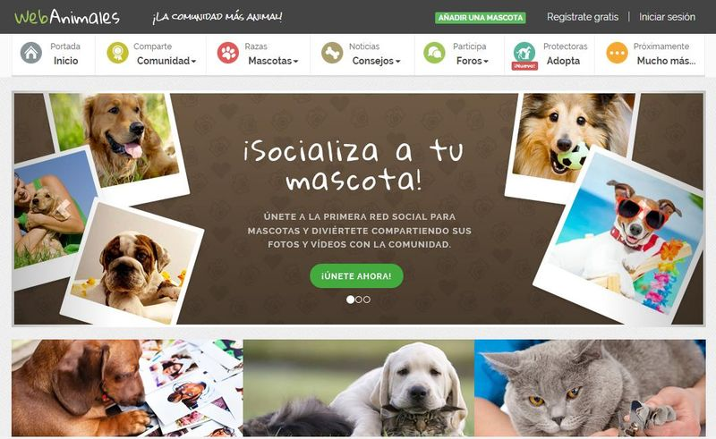 Webanimales: la nueva red social para las mascotas y sus dueños