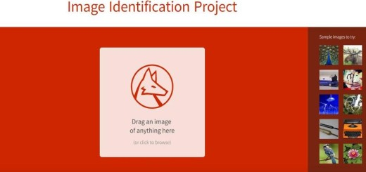 Wolfram  Image Identification Project