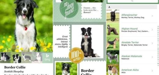 Fetch!, app de Microsoft que reconoce razas caninas (iOS)
