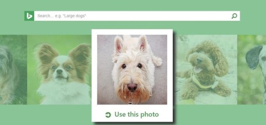 What is your dog: Microsoft lanza webapp que reconoce razas de perros