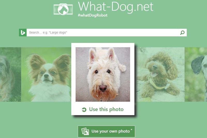 What is your dog: Microsoft lanza webapp que reconoce razas de perros