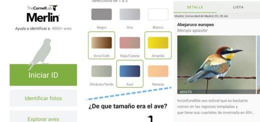 Aplicación para reconocer pájaros