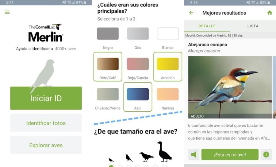 Aplicación para reconocer pájaros gratuita para tu Android o iPhone
